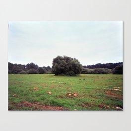 Lonely bush Canvas Print