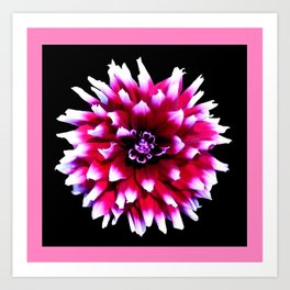 Dahlia in pink, red Art Print