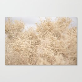 Dreamy Tumbleweeds Canvas Print