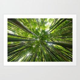 Looking Up A Bamboo Forest Canopy, Haleakala, Maui, Hawaii Art Print