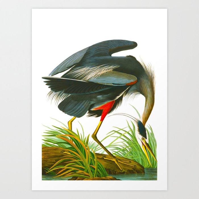 Great blue heron John James Audubon Vintage Scientific Bird Illustration Art Print