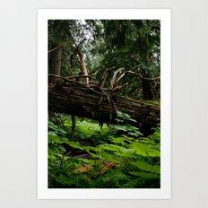 When a Tree Falls.. Art Print
