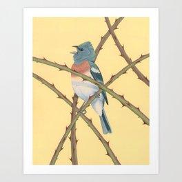 Lazuli Bunting Art Print