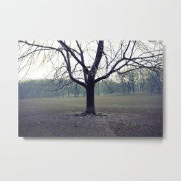 parktree Metal Print