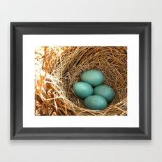 Four American Robin Eggs Framed Art Print