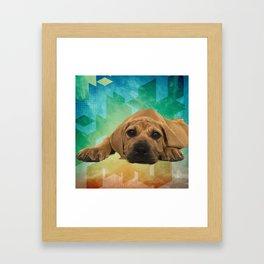 Boerboel puppy - South African Mastiff Framed Art Print