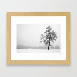 Solitary Tree in Winter Framed Art Print