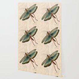Big Grasshopper Wallpaper