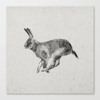 hare Canvas Prints featuring Hare by Darcy Cash