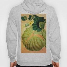 Muskmelon, Vintage Botanical Illustration Collage Art Hoody