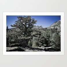 Search for Nature Art Print