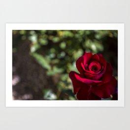 Rose of the Italian Vineyard Art Print
