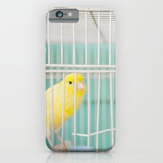 Yellow Bird against Turquoise Wall iPhone 6s Slim Case