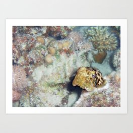 Baby Cuttlefish and Hard Coral Art Print