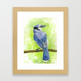 Blue jay watercolor Framed Art Print