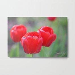 Tulip Triplets Metal Print