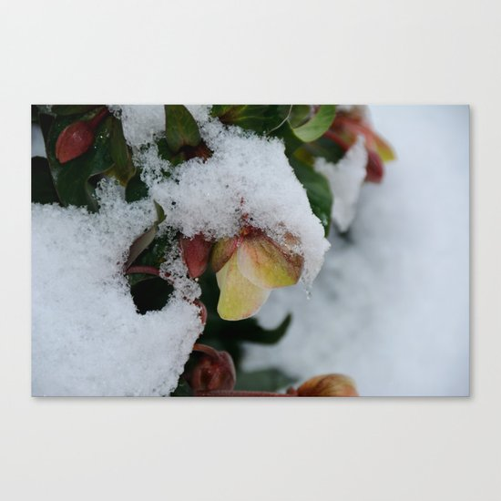 I promise you Spring Canvas Print