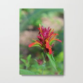 Shrimp Plant I -vertical Metal Print
