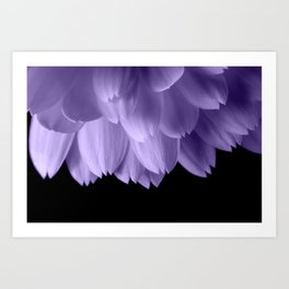 Ultra violet purple flower petals black Art Print