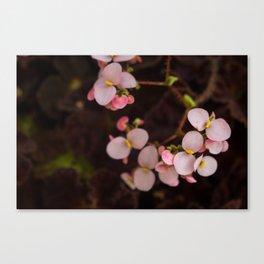 Turning Pink Canvas Print