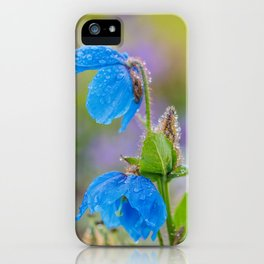 Himalayan Blue Poppies, after the rain iPhone Case
