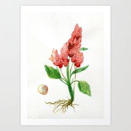 Quinoa Art Print
