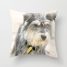Pippa - mini schnauzer dog at the beach Throw Pillow