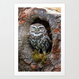 Owl in a tree hole Art Print