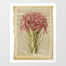 Book Art Page Pink Flower Art Print