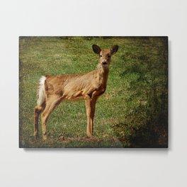 Speaking Softly- Deer Metal Print