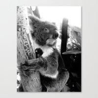 koala Canvas Prints featuring Koala by Alan Hogan