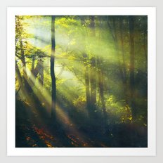 Rays - Morning Light in a Forest Art Print