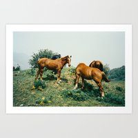 Wild Horses Shot on Porta 400 Film Art Print