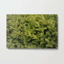 Green Shoots Metal Print
