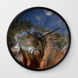 Mysterious Iguanas #1 captured by Jo DiLorenzo Wall Clock