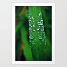 Rainy Drops (Color) Art Print