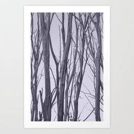 Ghosts of the bushland Art Print