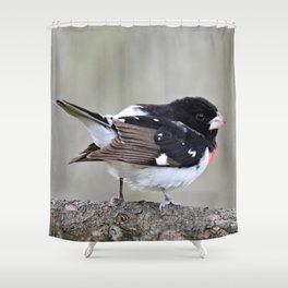A Touch of Class: Rose-Breasted Grosbeak Shower Curtain