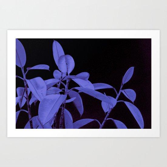 Rubber plant II Art Print
