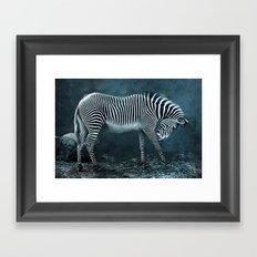 blue zebra Framed Art Print