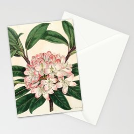 Rhododendron maximum 'Great laurel' Stationery Cards