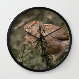 Little sparrow in the tress Wall Clock