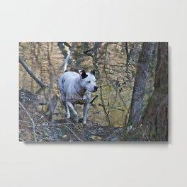 Hunting Dog Metal Print