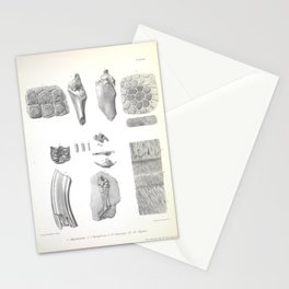 The Zoology of the Voyage of H.M.S. Beagle 1840 - Fossil Mammalia - Bone Comparisons Stationery Cards