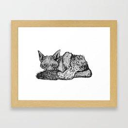 Canis mesomelas Framed Art Print