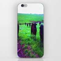 cows iPhone & iPod Skins featuring Cows by 13th Moon Social Club