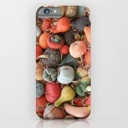 cornucopia (heirloom pumpkins and squashes) iPhone Case