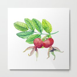 Branch leaves with a dog rose watercolor Metal Print