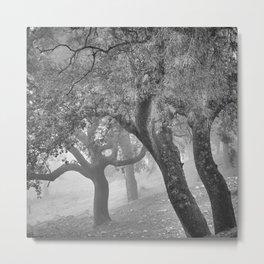Cork oaks. Foggy sunrise at the mountains. BW. Square Metal Print