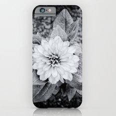 Zinnia Slim Case iPhone 6s